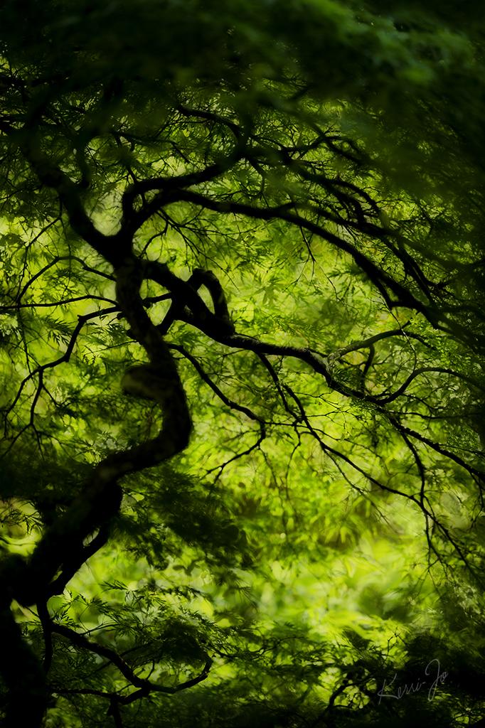 Japanese Garden fractal