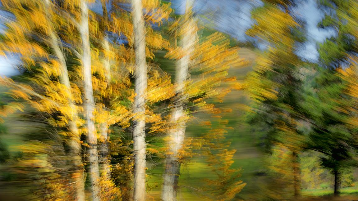 Naramata trees