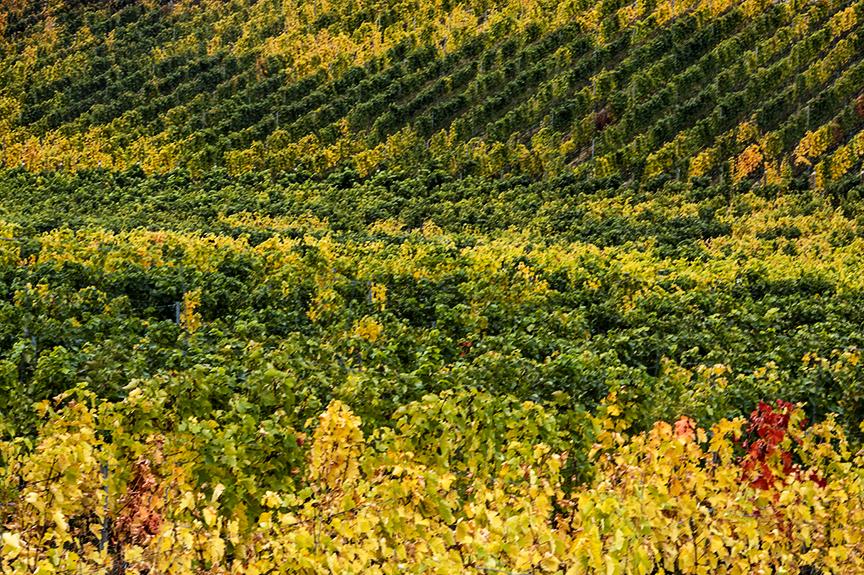Naramata vinyards