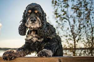 Dogs of Steveston